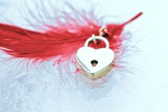 Heart shape on red feather. Golden metal heart with red feather still life Royalty Free Stock Image