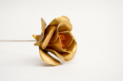 Golden metal rose. On white background Stock Image