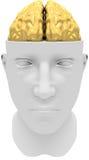 Golden mind Stock Photos