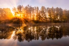 Free Golden Misty Sunrise On The Pond In The Autumn Morning. Trees With Rays Of The Sun Cutting Through It, Reflected In The Water Royalty Free Stock Photography - 196970447