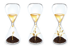 Golden Money tree inside Glass. Vector. Glass clocks With Golden sprouts, coins and Golden drops, Isolated On White Royalty Free Stock Photos
