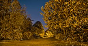 Golden Mont-Royal park from Montreal, Canada in the fall night. The golden autumn scene with trees and shrubs. Golden Mont-Royal park from Montreal, Canada in stock photos