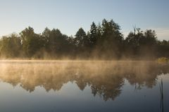 Golden morning fog. Over calm water of pond royalty free stock images