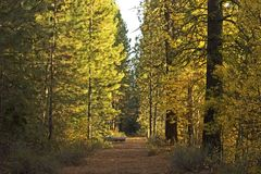 Golden Morning Light on Mountain Hiking Trail stock image