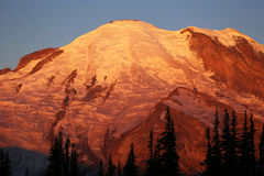 Golden Mount Rainier at sunrise Royalty Free Stock Photography