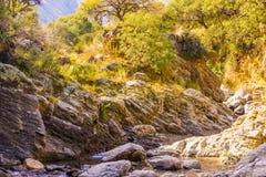 Golden mountain creek Stock Image