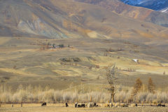 Golden Mountains of Altai Stock Images