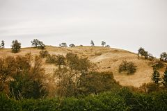 Golden Mountains Lined With Trees and Plants in Sonoma County, California. Autumn landscape of a mountain lined with trees and plants in Sonoma, California royalty free stock images