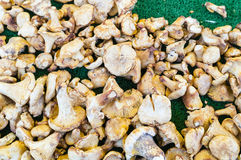 Golden mushrooms in a market, Paris France Royalty Free Stock Image