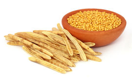 Golden Mustard with empty pods Stock Images