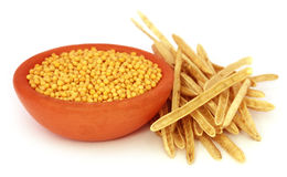 Golden Mustard with empty pods Royalty Free Stock Photography