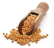 Golden Mustard. In a wooden scoop over white background royalty free stock image