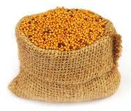 Golden Mustard in a sack bag Stock Photography