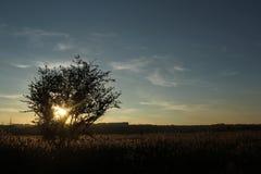 Golden_Nature Imagem de Stock