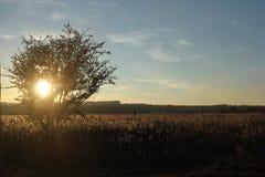 Golden_Nature 库存图片