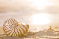 Golden nautilus shell Royalty Free Stock Photos