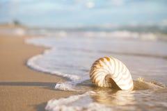 Golden nautilus shell Stock Photography