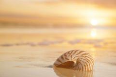 Golden nautilus shell Stock Photo