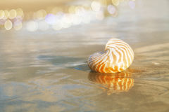 Golden nautilus shell Royalty Free Stock Photography