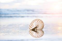 Golden nautilus shell Stock Photos