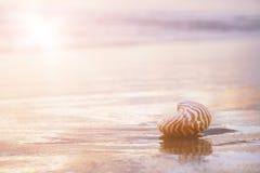 Golden nautilus shell Royalty Free Stock Photo