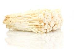 Golden needle mushroom Stock Photos