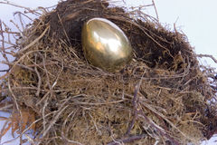 Golden Nest Egg. A gold egg in a bird's nest royalty free stock images
