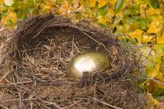 Golden Nest Egg. A golden egg in the birds' nest Stock Images