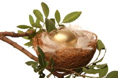 Golden Nest Egg. Golden egg in a nest with white feathers - conceptual retirement metaphor royalty free stock image