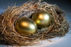 Golden Nest Egg. With dramatic lighing Stock Photography