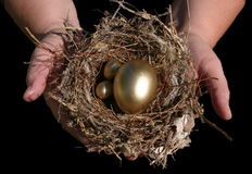 Golden Nest Eggs In Hand. Real Golden Nest Eggs securly held in a real bird nest in real human hands isolated on black