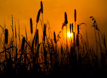 Golden Nights on the Prairie Stock Photography