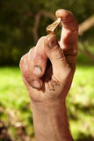 Golden nugget in hand. Detail of golden nuggets found by today prospector in sand of creek Stock Images