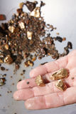 Golden nuggets on hand. Detail of golden nuggets found by today prospector in sand of creek Royalty Free Stock Photography