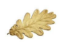 Golden oak leaf Stock Photos