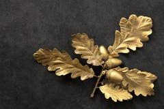 Golden Oak Leaf Beauty Stock Photo