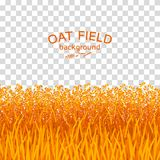 Golden oat field on checkered background. Colorful vector illustration Stock Photos