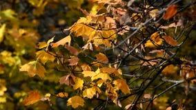 Golden October 2016 in Berlin Spandau, Germany stock footage