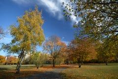 Golden October 2016 in Berlin Spandau, Germany Royalty Free Stock Images