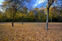 Golden October 2016 in Berlin Spandau, Germany Royalty Free Stock Photo