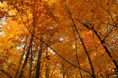 Golden October forest Stock Images