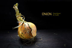 Golden onion from the organic vegetable garden on dark wood Royalty Free Stock Images