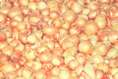 Golden onion, vintage style. Stock Image