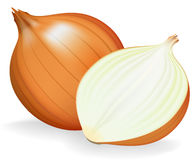 Golden onion whole and half. vector illustration