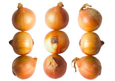 Golden onions Royalty Free Stock Photos