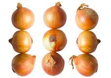 Golden onions Royalty Free Stock Photos