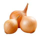 Golden onions isolated Stock Photos