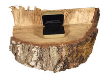 Golden openning decorative box on a piece of birch trunk isolate Stock Photo