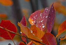 Golden Orange Colors of Fall with Rain Stock Image