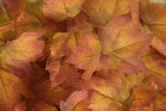 golden and orange leaves decoration stock images